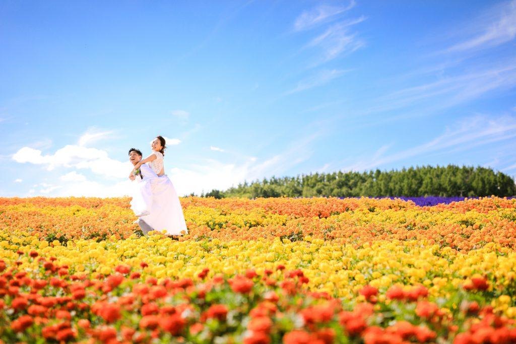 flower field in Furano 富良野の花畑